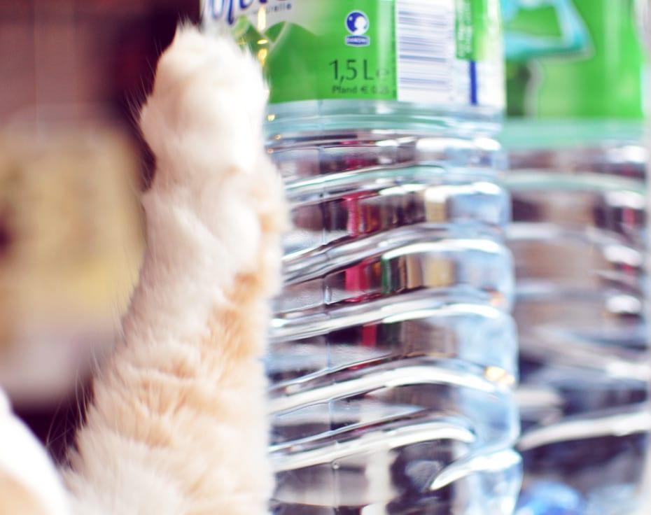 Wie viel Wasser ist genug