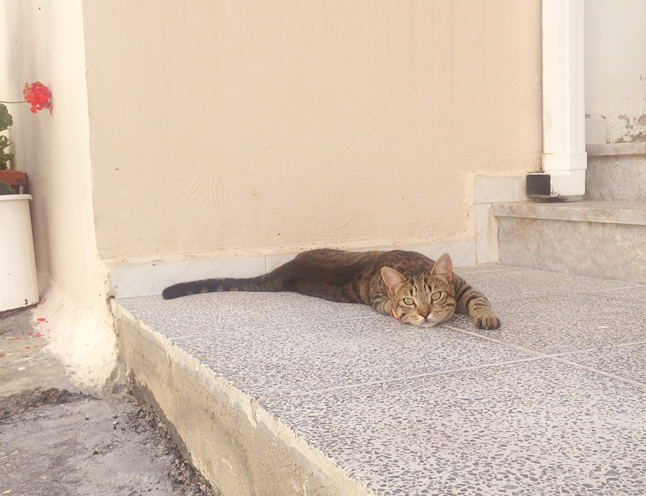 Streuner auf Kreta
