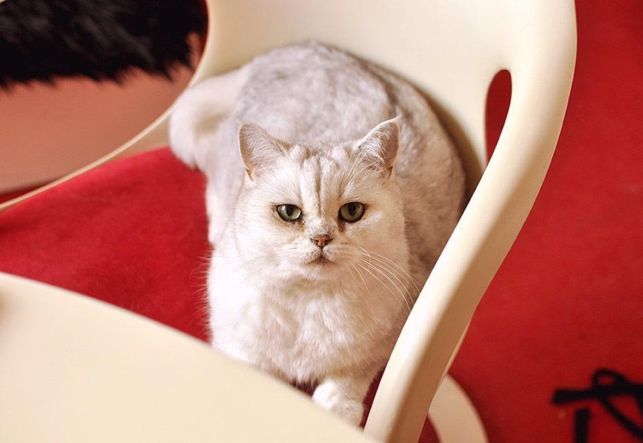 Rosi von der Katz | Schwatz Katz