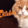 Schwatz Katz im Oktober