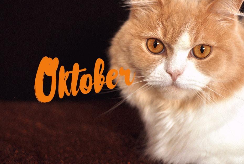 Schwatz Katz im Oktober | Schwatz Katz