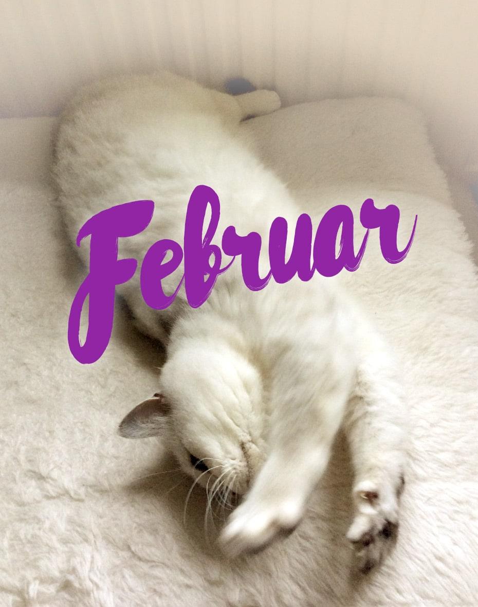Februar 2016 auf der Katz