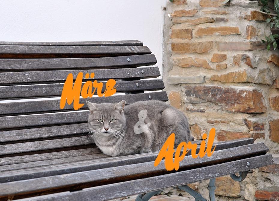 März, April, Webinar & Muttertag | Schwatz Katz