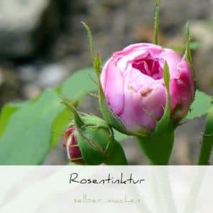 Wie man eine Rosentinktur herstellt | Schwatz Katz