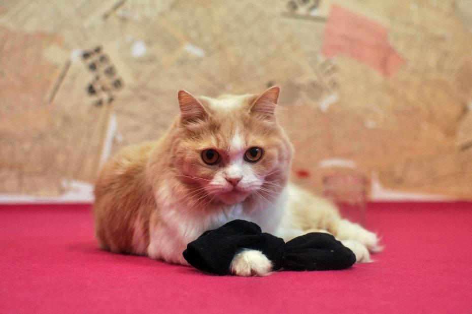 »Catnip« Katzenspielzeug aus echter Katzenminze | Schwatz Katz