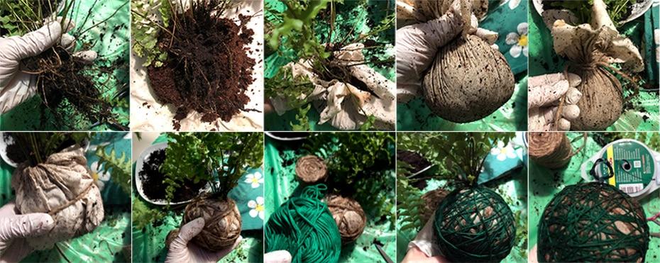 Kokedama-inspirierte Pflanzbälle | Schwatz Katz