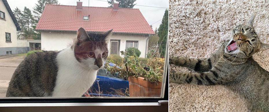 Katzen beim Seifesieden raus! |Schwatz Katz